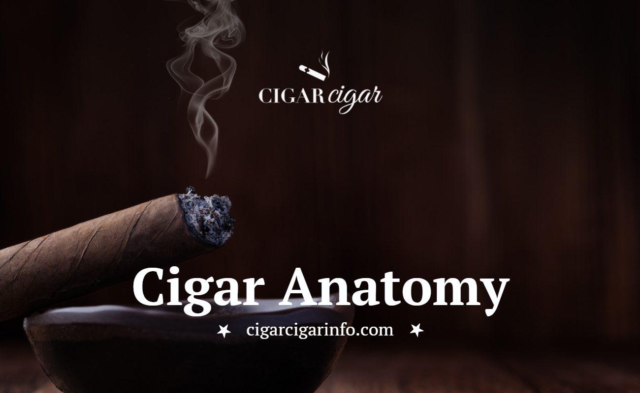 Cigar Anatomy - Cigar Cigar Featured Image